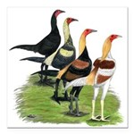 "Modern Game Roosters Square Car Magnet 3"" x 3"