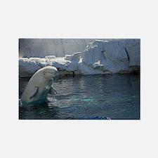 Beluga Whale jumping 2 Rectangle Magnet