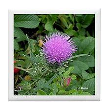 Maine Wild Flower