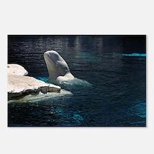 Beluga Whales 4 Postcards (Package of 8)