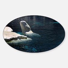 Beluga Whales 4 Decal
