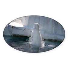 Beluga Whale jumping 3 Decal