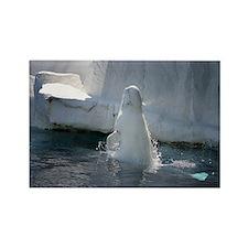 Beluga Whale jumping 3 Rectangle Magnet