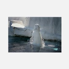 Beluga Whale jumping 3 Rectangle Magnet