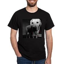 White Labrador, Black T-Shirt