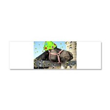 Party Animal Horse Car Magnet 10 x 3