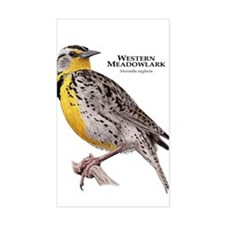 Western Meadowlark Decal