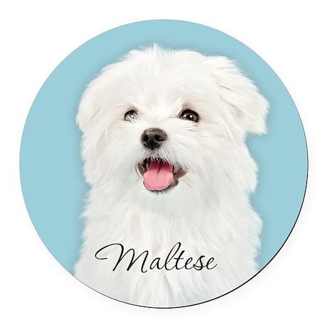 Cute Maltese Round Car Magnet