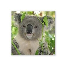"Helaine's Koala Bear Square Sticker 3"" x 3"""