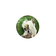 Chinese Crested Painting Mini Button (10 pack)