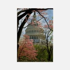 Capitol Amongst Cherry Trees Rectangle Magnet