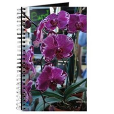 Purple Moth Orchid Journal