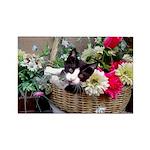 Kitten in a Basket Rectangle Magnet