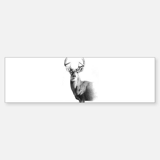 Whitetail Sticker (Bumper)