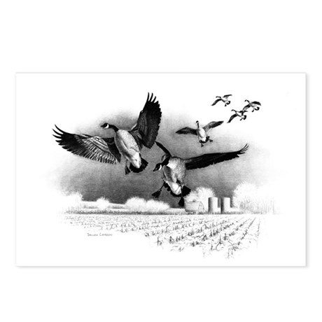 Canadian Geese Postcards (Package of 8)