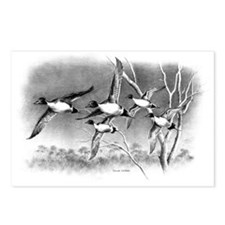 Pintails Postcards (Package of 8)