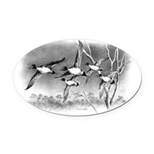 Pintails Oval Car Magnet