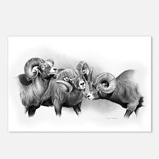 Rams Postcards (Package of 8)