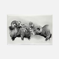 Rams Rectangle Magnet (100 pack)