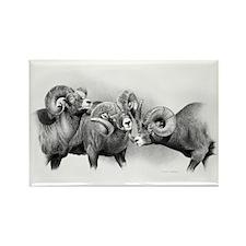 Rams Rectangle Magnet
