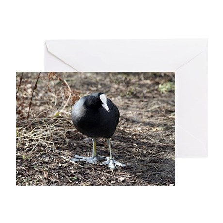 Smiling Coot Greeting Cards (Pk of 10)