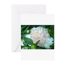 Peonies Greeting Cards (Pk of 10)