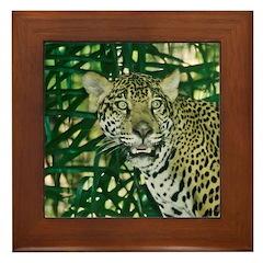 Jaguar Animal Picture Framed Tile