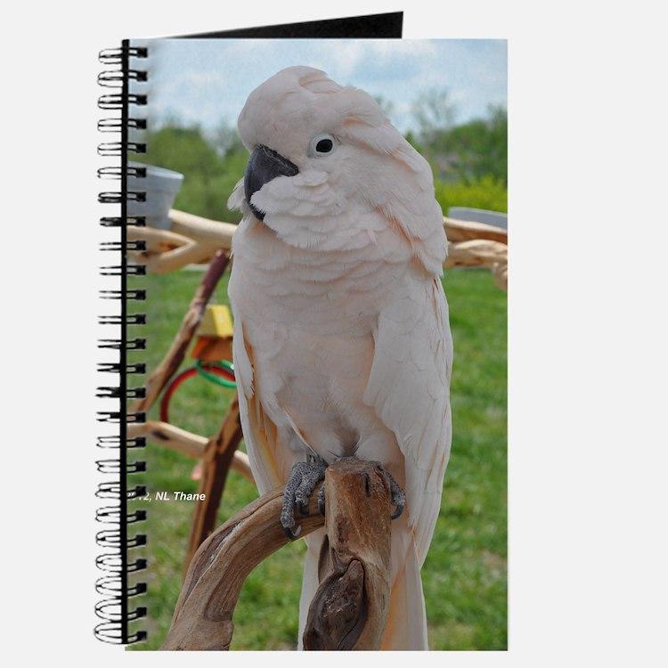 Serene Moluccan Journal