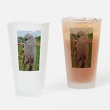 Serene Moluccan Drinking Glass