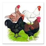 "Heavy Breed Roosters Square Car Magnet 3"" x 3"