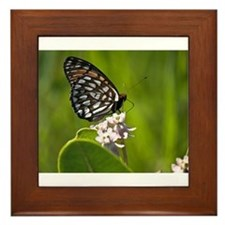 Regal Fritillary Framed Tile