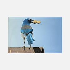 Cute Bluebird with Peanut Rectangle Magnet