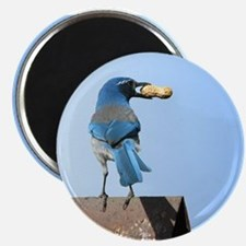 "Cute Bluebird with Peanut 2.25"" Magnet (10 pack)"
