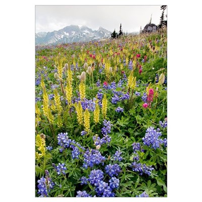 Wildflower meadow Framed Print