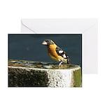 Cute Black Headed Grosbeak Greeting Cards (Pk of 1