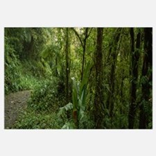 Dirt road in a forest, Monteverde Cloud Forest, Co