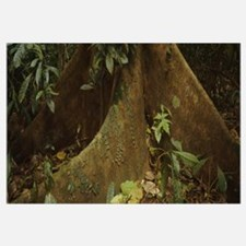 Close-up of a tree root, Carara National Park, Cos