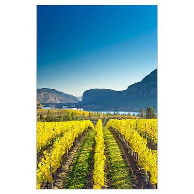 Vineyard, Canada Poster