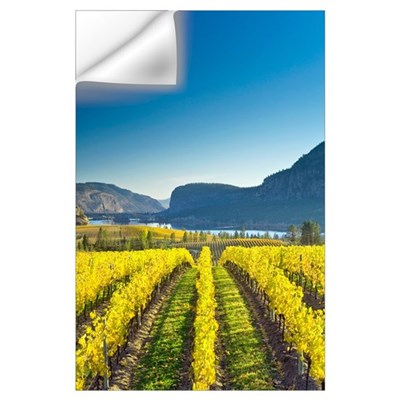 Vineyard, Canada Wall Decal