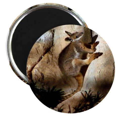"Yellow-Footed Rock Wallaby 2.25"" Magnet (100 pack)"
