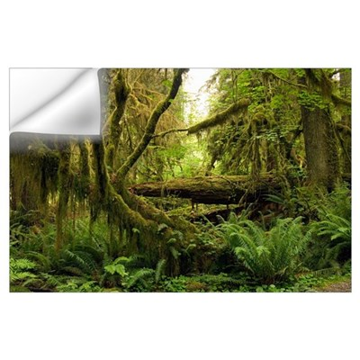 Temperate rainforest Wall Decal