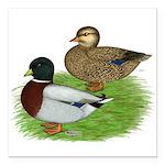 "Grey Call Ducks Square Car Magnet 3"" x 3&quot"