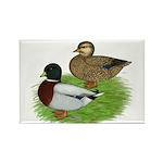 Grey Call Ducks Rectangle Magnet (10 pack)