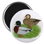 Grey Call Ducks Magnet