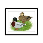 Grey Call Ducks Framed Panel Print