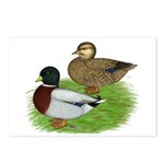 Grey Call Ducks Postcards (Package of 8)