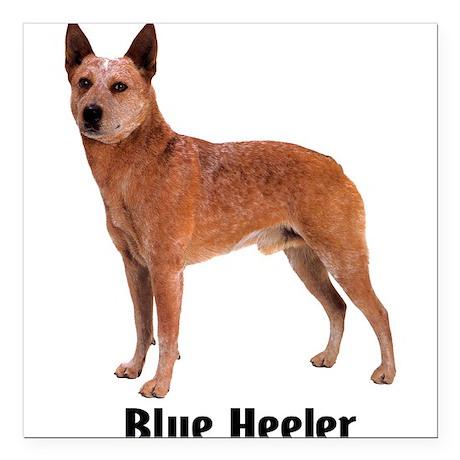 "BlueHeeler.png Square Car Magnet 3"" x 3"""