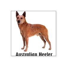 "AustralianHeeler.png Square Sticker 3"" x 3"""