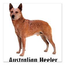 "AustralianHeeler.png Square Car Magnet 3"" x 3"""