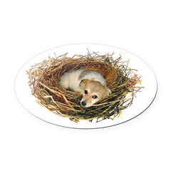 Puppy Nest Oval Car Magnet